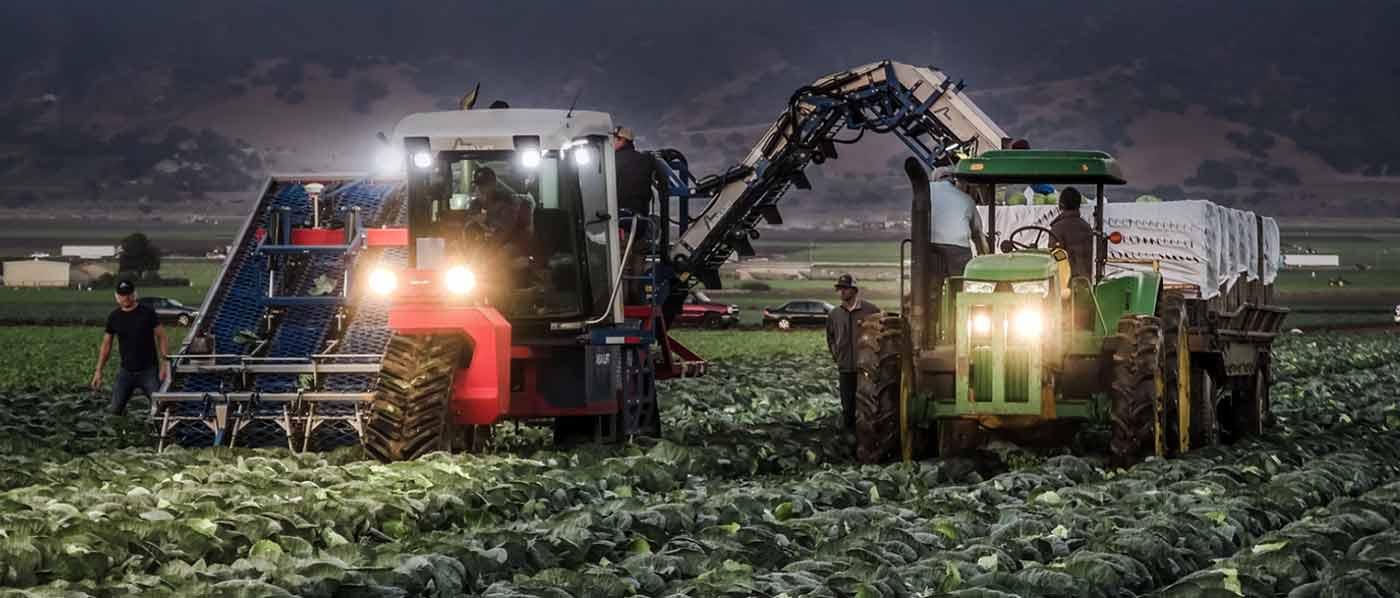 Комбайни для збору капусти